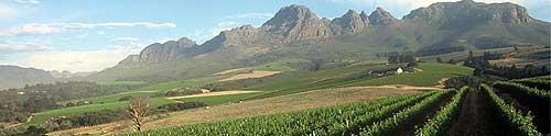 Viñas de las Bodegas Luna Wineyards de Arnold Palmer